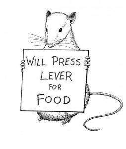 A rat holding a sign that says